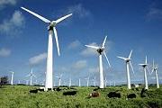 Китайская компания построит ветропарк под Калининградом